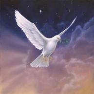068_white_dove_1